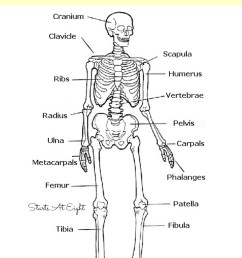 the skeletal system hands on learning resources from starts at eight this is [ 800 x 1200 Pixel ]