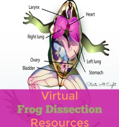 Virtual Frog Dissection Resources - StartsAtEight [ 1100 x 800 Pixel ]