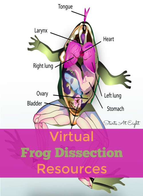 small resolution of Virtual Frog Dissection Resources - StartsAtEight