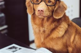 ginger dog wearing glasses reading book flexibility
