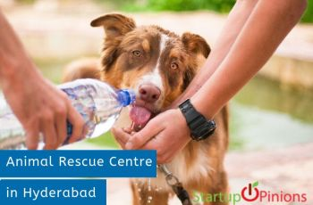 animal shelters in hyderabad