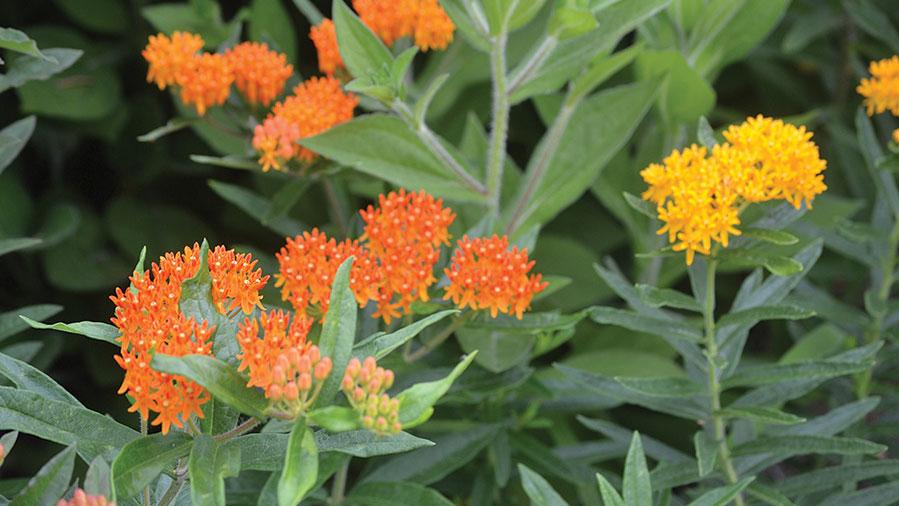 callout-pollinators