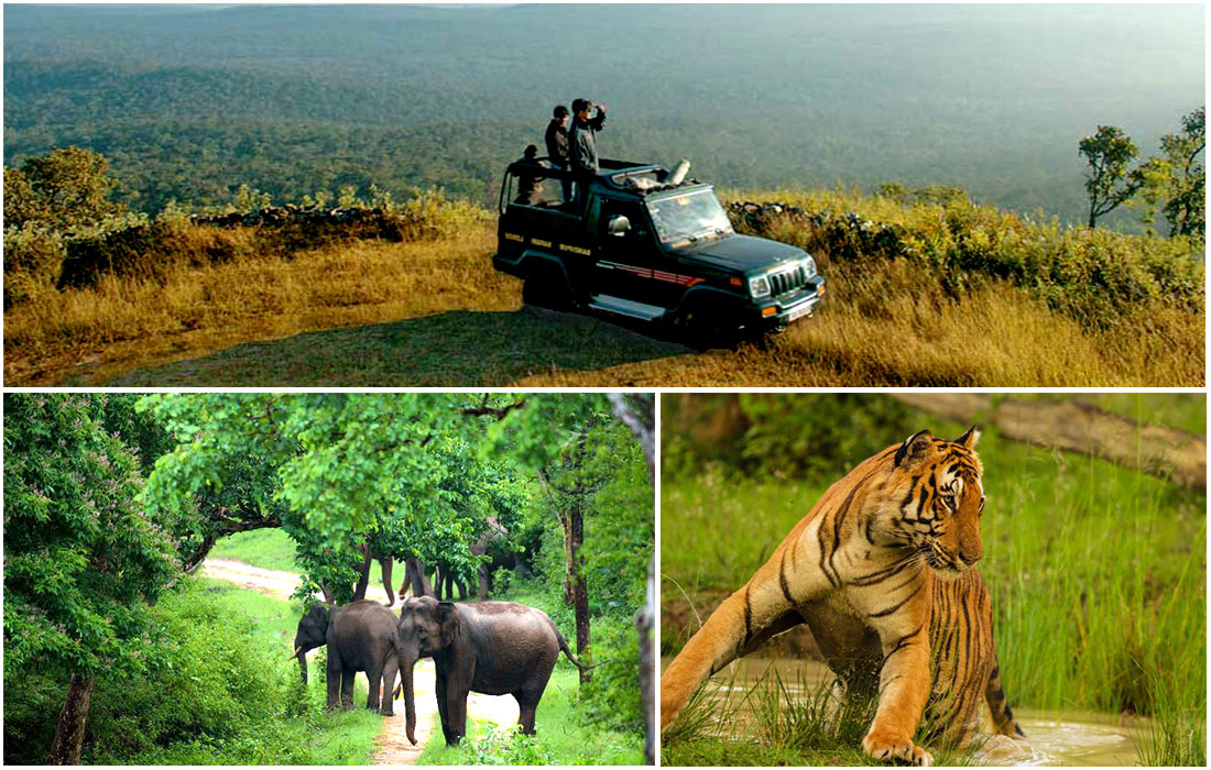 Bandipur Tiger Reserve & National Park