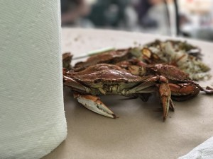 Important Blue Crab Vocabulary that Every Maryland Visitor Should Know