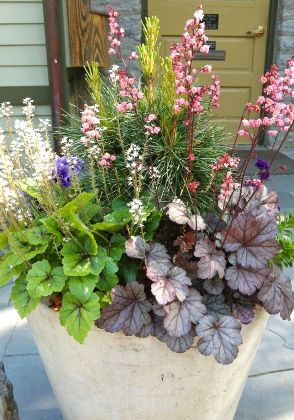 beautiful spring container plantings