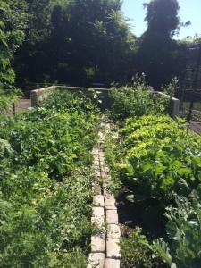 NYC Parks' citywide community gardening program 2018