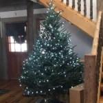 DSNY - Christmas Tree Disposal 2020