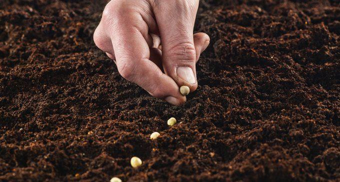 Il bullismo non nasce da un unico seme. I diversi fattori implicati in questo fenomeno