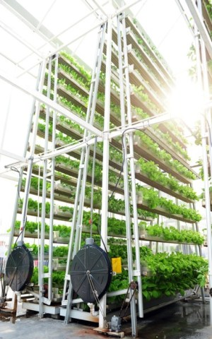Vertical Farming Is Key to the Smart Cities of the Future