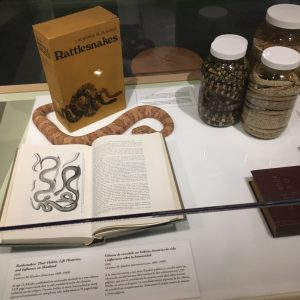 Rattle Snake Exhibit at the San Diego Natural History Museum in California
