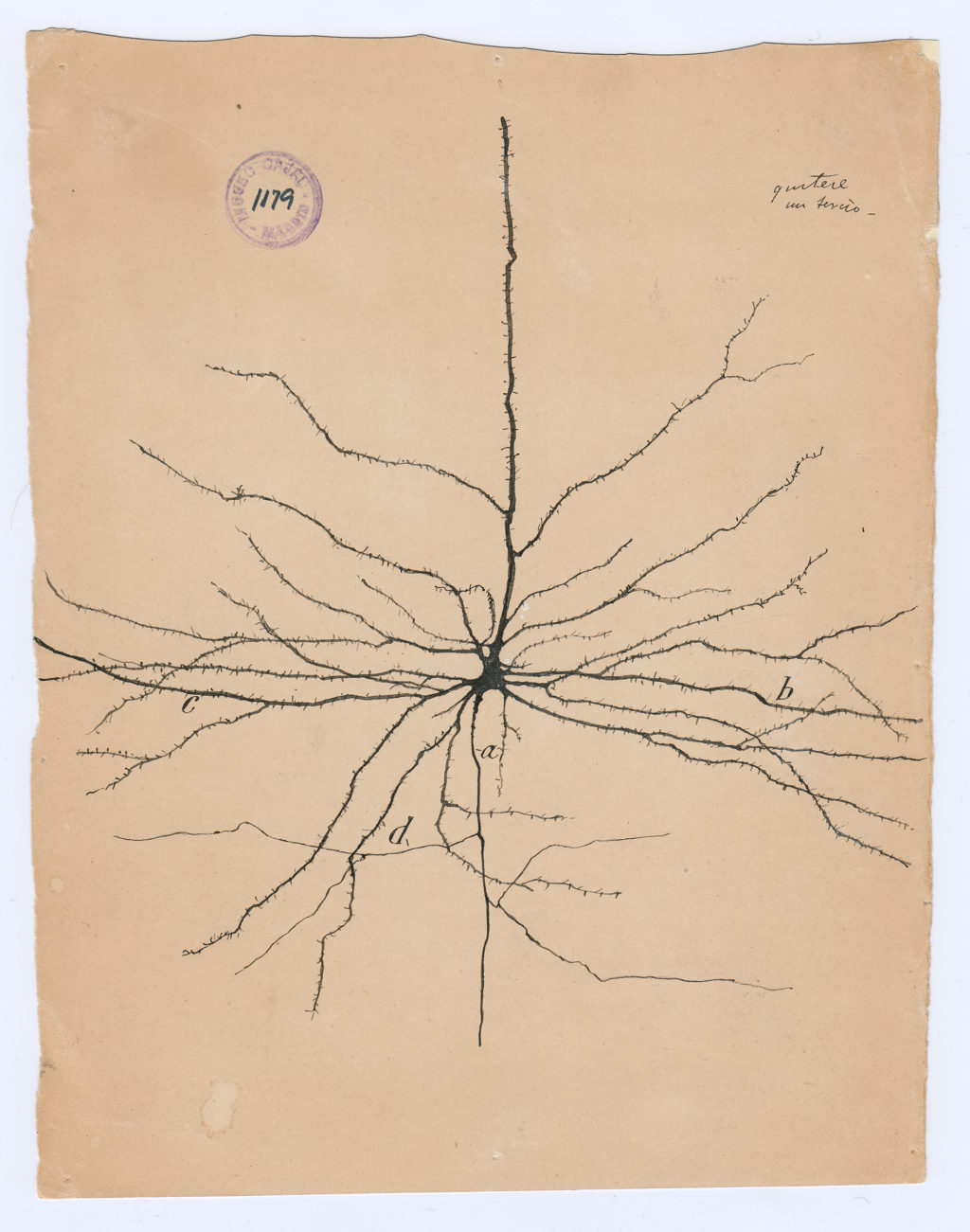 hight resolution of 02 cajal drawing