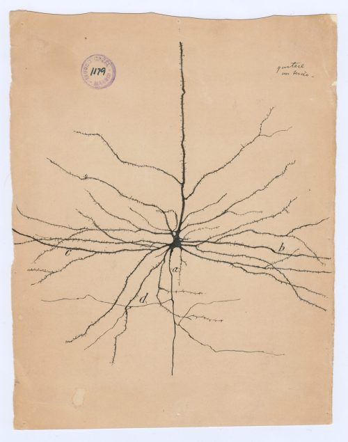 small resolution of 02 cajal drawing