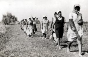 Per le donne vietata l'occupazione nei comuni (pianurareno.org)