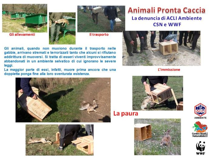 Animali Pronta Caccia - ACLI Ambiente CSN WWF