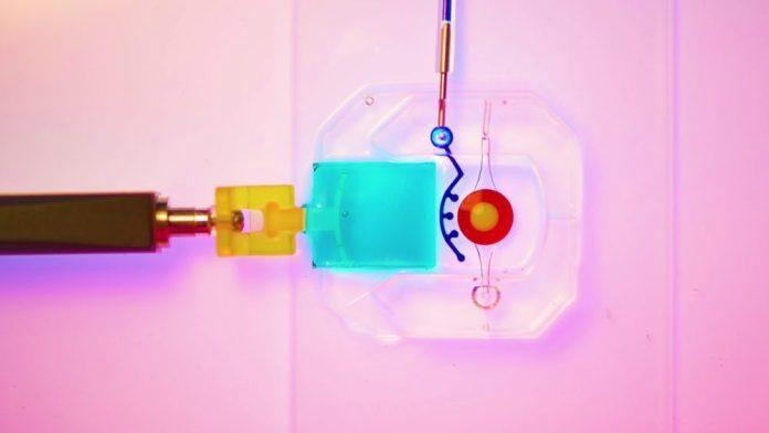 Un occhio su chip, creato in 3D con cellule umane
