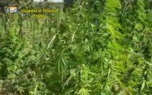 GdF cerignola droga (12)