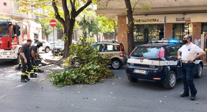 Cade grosso ramo di albero di platano in corso Giannone a foggia e danneggia auto in sosta. È successo questa mattina intorno alle ore 9.45 quando un grosso ramo di albero è caduto su una fiat panda in sosta