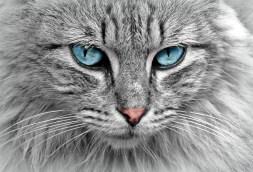 cat-animal-cat-portrait-mackerel