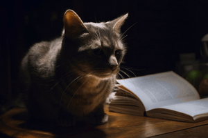 catwithbook