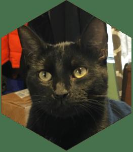Our Feline FurBabies- Lucky