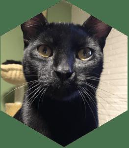 Our feline children- Sir Meows A Lot