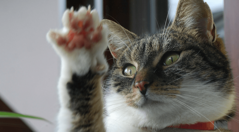 HOW TO TRIM A CATS CLAWS - Stay At Home Cat Mom