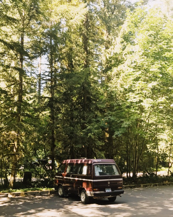 Summer in the Forest - Stay Classic