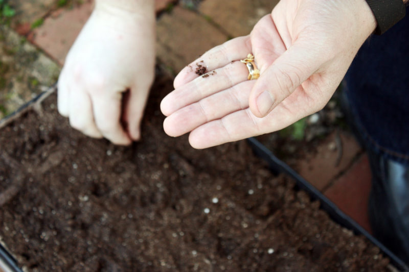 How to start your first vegetable garden: easy step by step and instructions with pictures to help you begin eating your very own home grown vegetables!   Stay gold Autumn