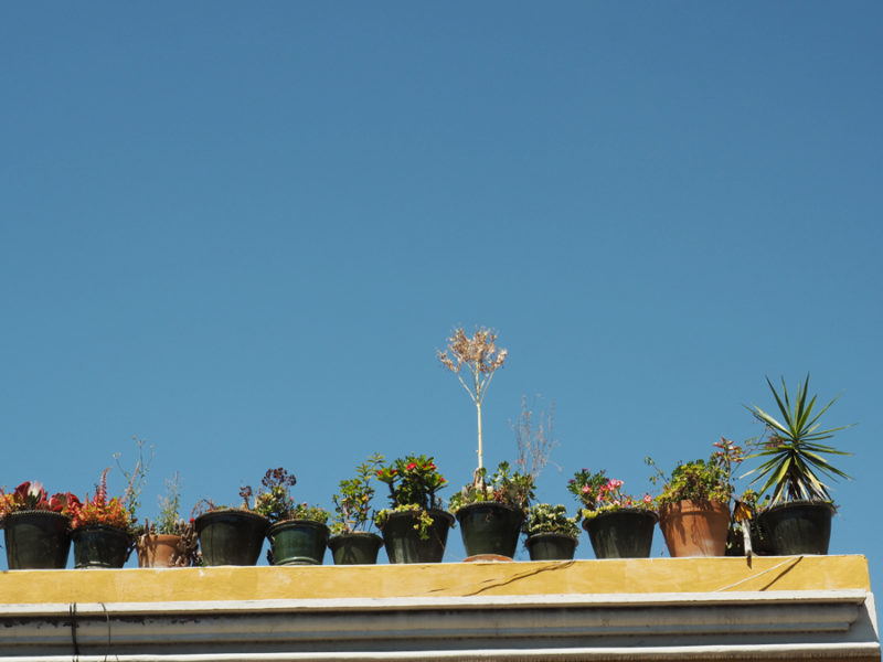 Decorative plant pots seen on the streets in Oaxaca City, Mexico. | Stay gold Autumn