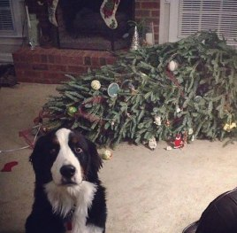 A puppy that has tipped over the Christmas tree.