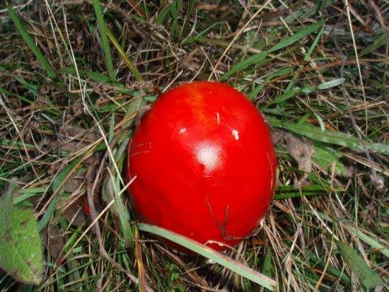 Gljive na Kukavici