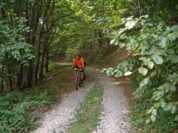 Kroz guste šume Palčine