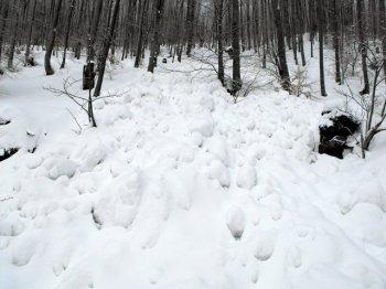 Odron lavine na potezu G. Studena - Bojanine Vode