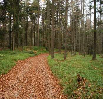 Šumski put kojim se prilazi Košaninovim jezerima