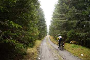 Spust odličnim šumskim putem kroz prelepe četinarske drvorede