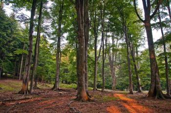 U šumama Frumosula