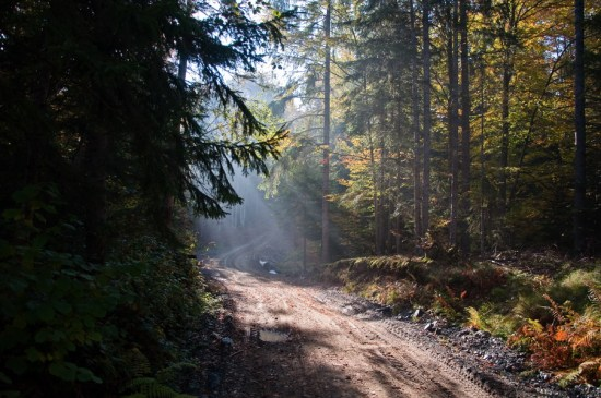 U gustim šumama Radočela