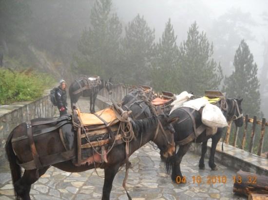 Pomoćna radna snaga za prenos opreme od Priona do doma A