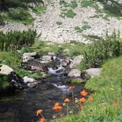 Pritoka reke Bnderice nadomak Muratovog jezera