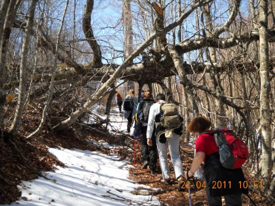 Popadala stabla na trasi