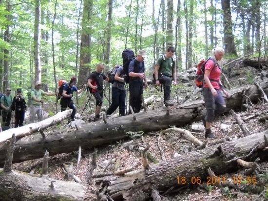 Popadala stabla - prepreke na stazi
