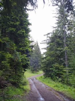 Put prema Zelenom borju