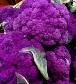 Violetta Italia Cauliflower - St. Clare Heirloom Seeds