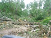 Trees blocking the road to St. John's Group Camp at St. Croix State Park