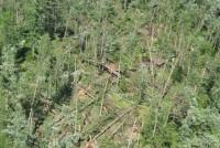St. Croix State Park storm damage photo