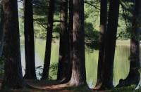 St. Croix pines