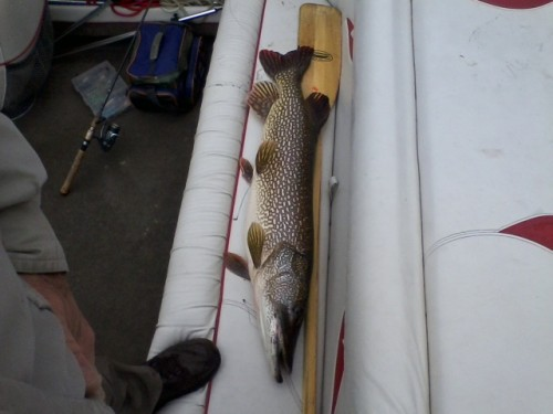 St. Croix River northern pike