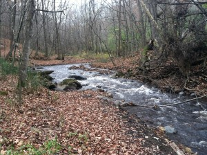 Brown's Creek