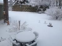 My yard on April 19, 2013