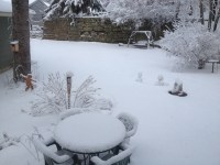 My yard on April 19, 2013